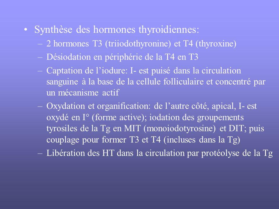 Synthèse des hormones thyroidiennes: