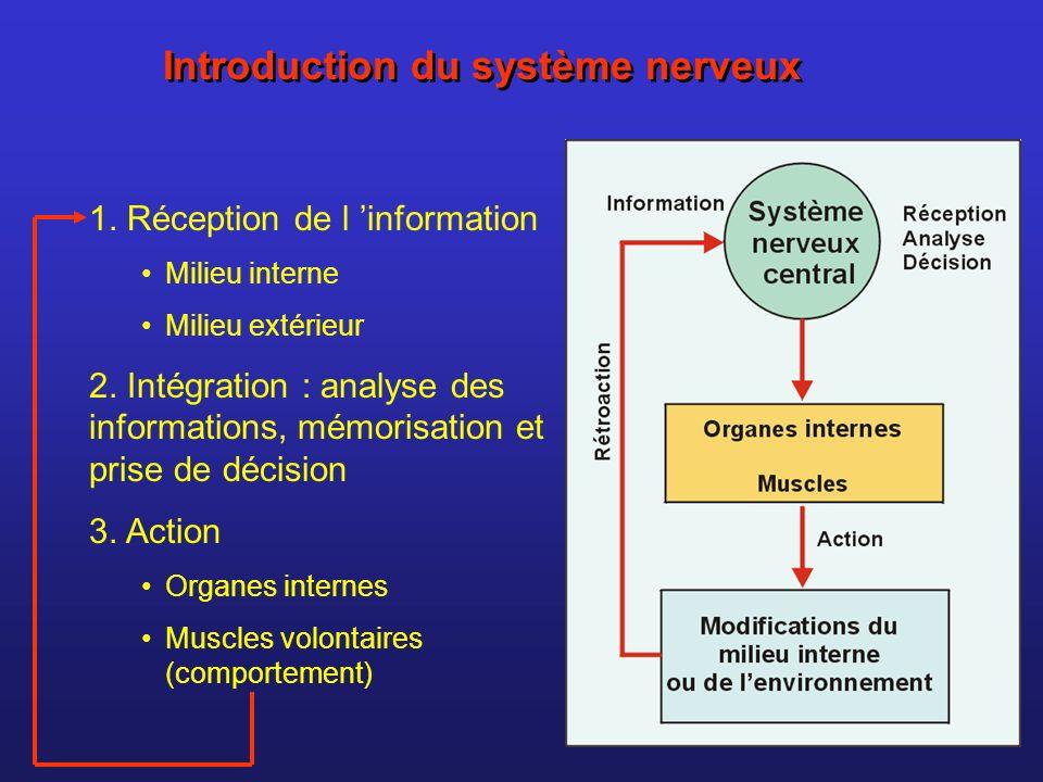 Introduction du système nerveux