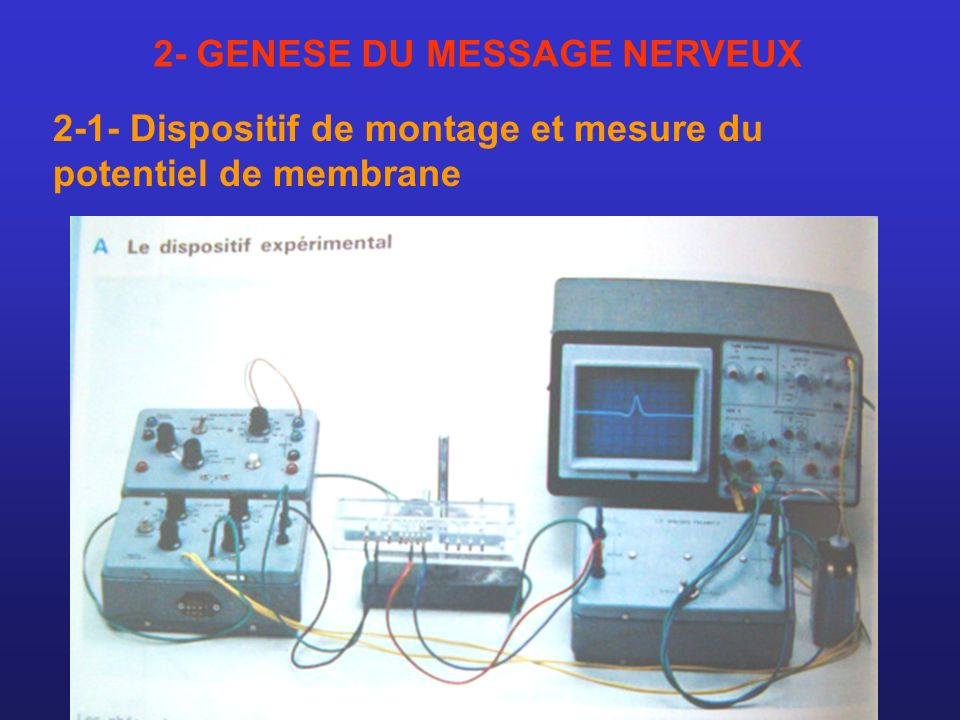2- GENESE DU MESSAGE NERVEUX