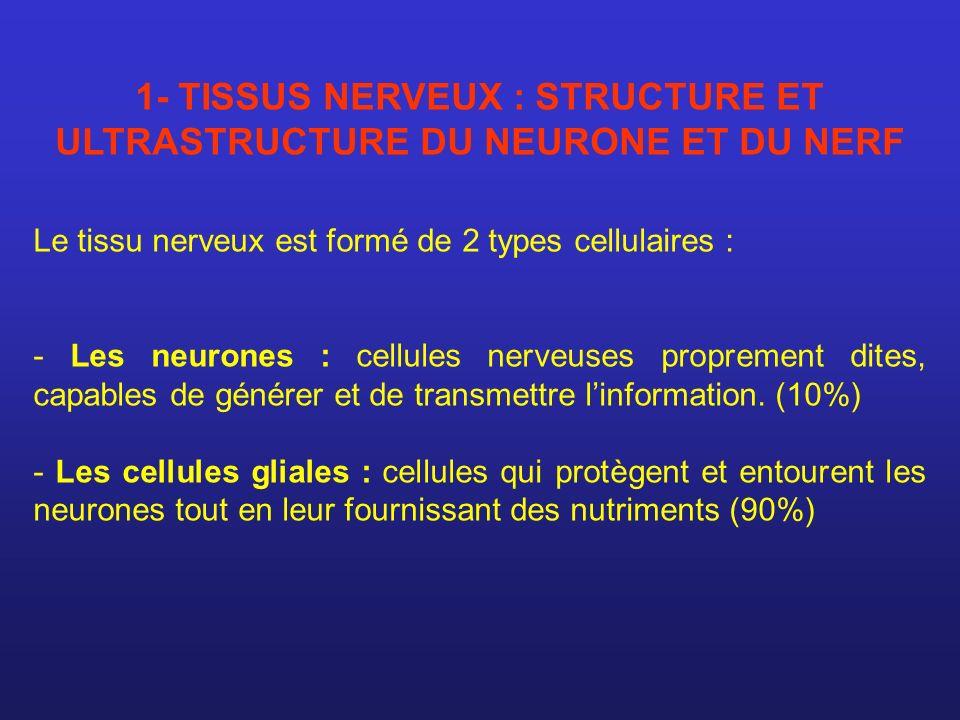 1- TISSUS NERVEUX : STRUCTURE ET ULTRASTRUCTURE DU NEURONE ET DU NERF