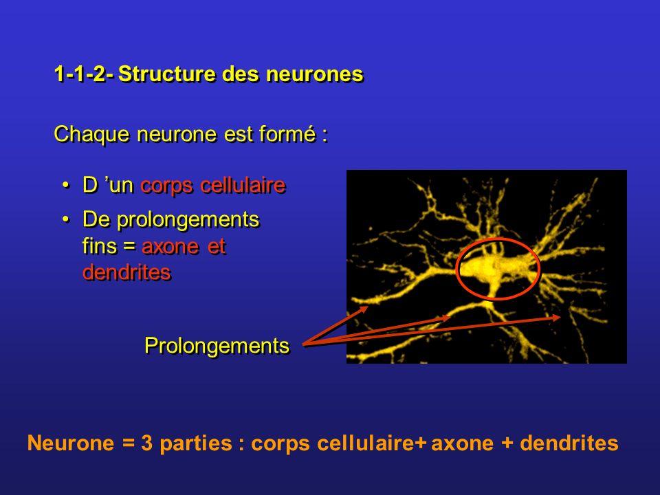 1-1-2- Structure des neurones