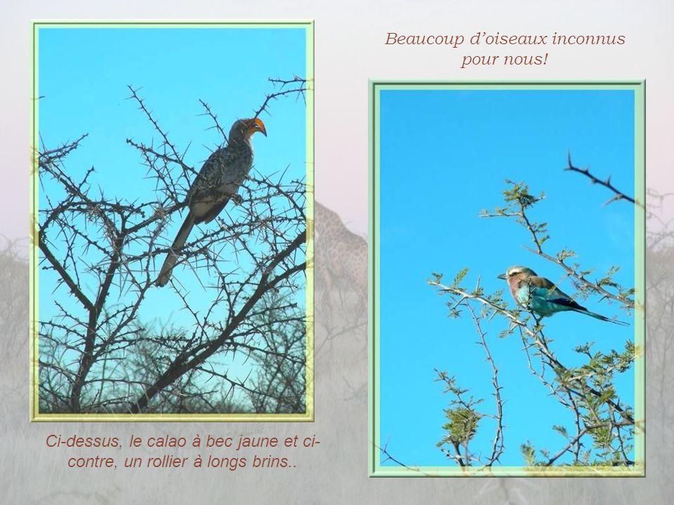 Beaucoup d'oiseaux inconnus pour nous!