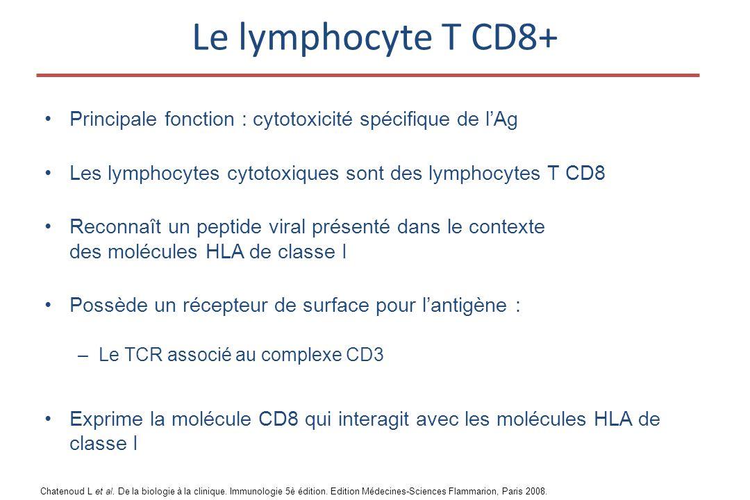 Le lymphocyte T CD8+ Principale fonction : cytotoxicité spécifique de l'Ag. Les lymphocytes cytotoxiques sont des lymphocytes T CD8.