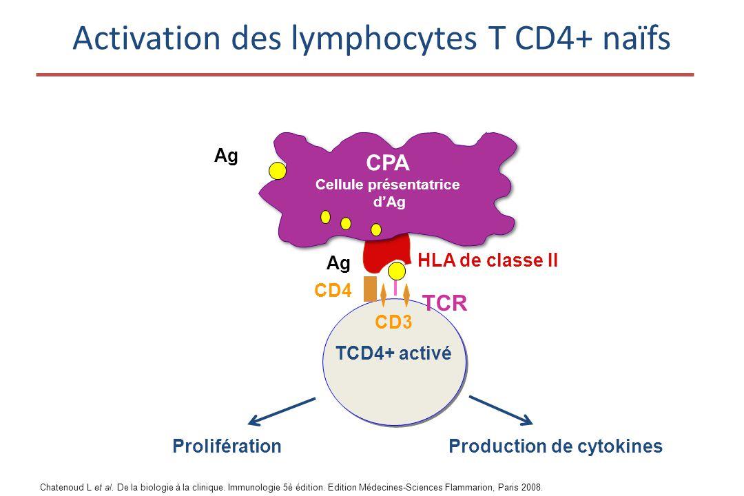 Activation des lymphocytes T CD4+ naïfs