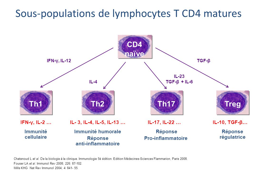 Sous-populations de lymphocytes T CD4 matures