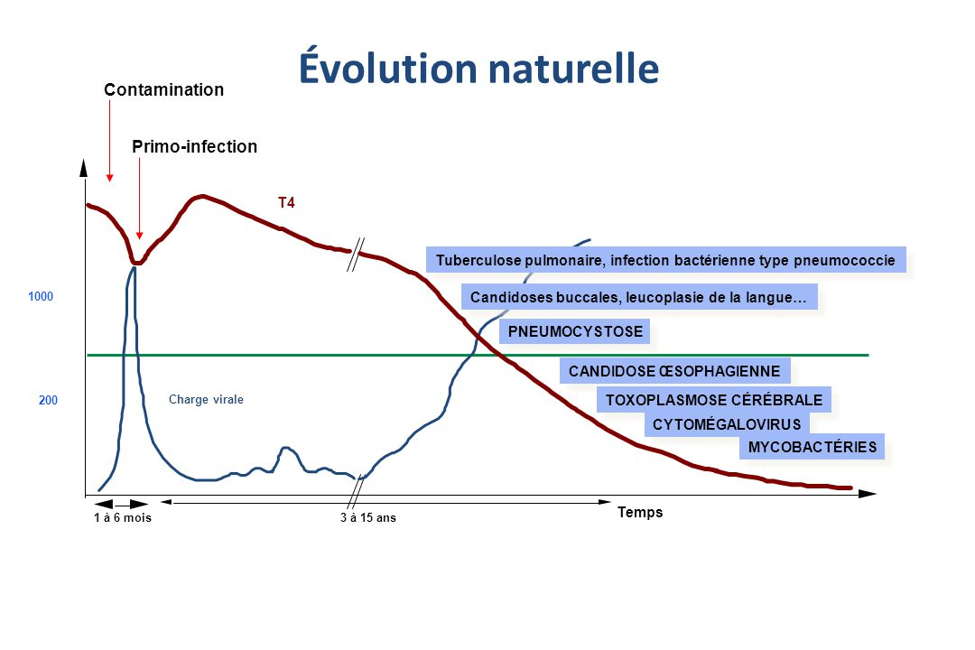 Évolution naturelle Contamination Primo-infection T4