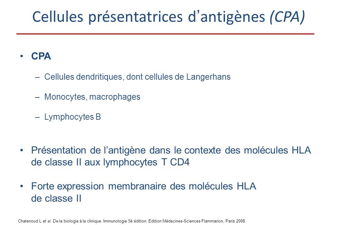 Cellules présentatrices d'antigènes (CPA)