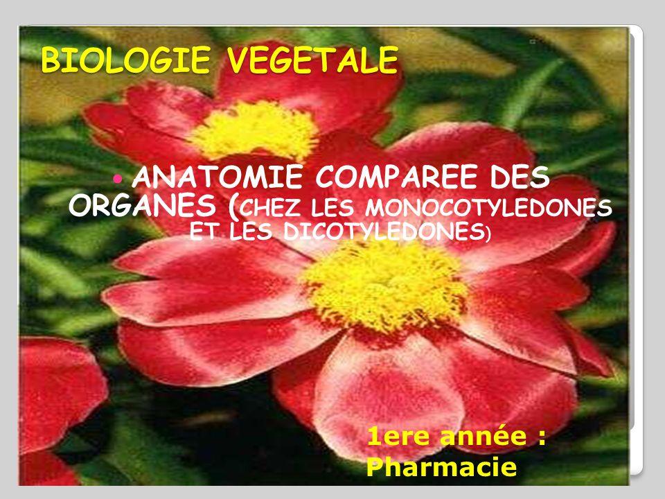 BIOLOGIE VEGETALE ANATOMIE COMPAREE DES ORGANES (CHEZ LES MONOCOTYLEDONES ET LES DICOTYLEDONES) 1ere année : Pharmacie.