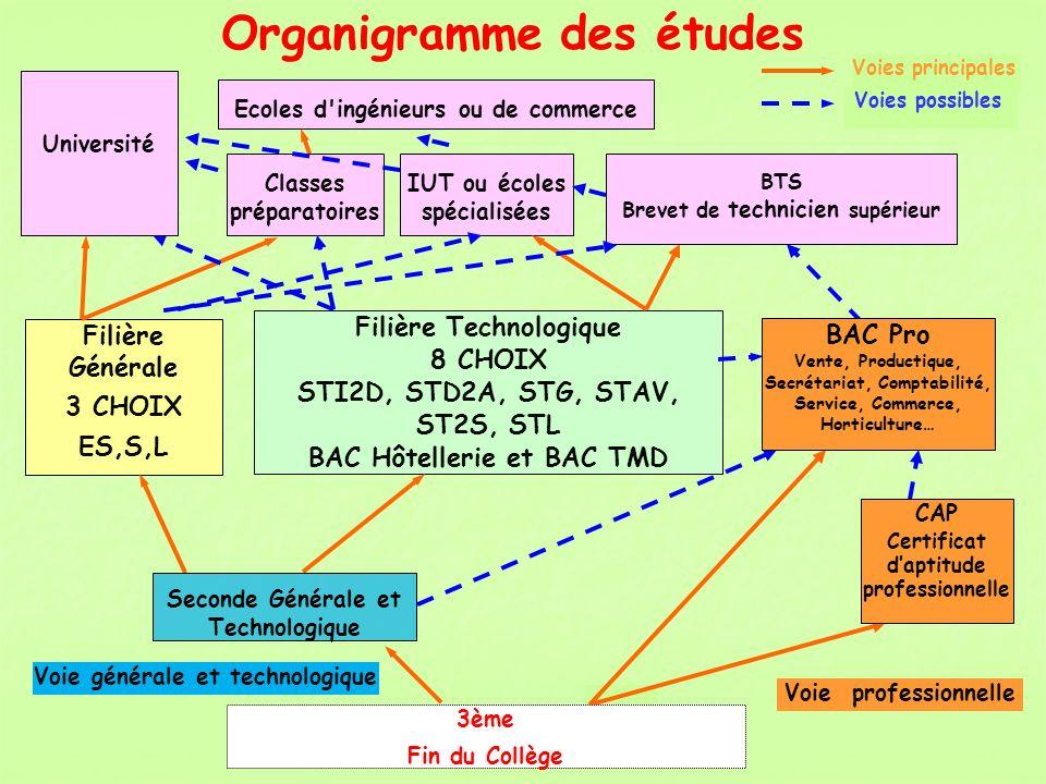 Organigramme des études