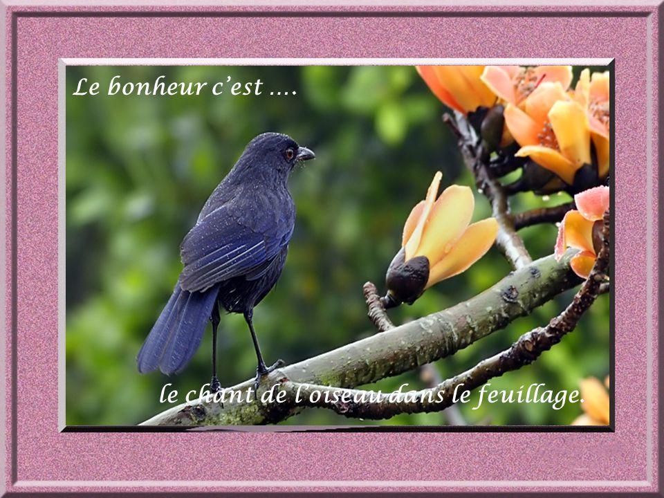 le chant de l'oiseau dans le feuillage.