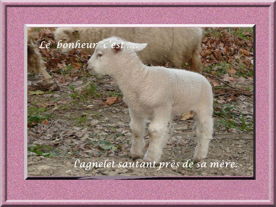 Le bonheur c'est …. l agnelet sautant près de sa mère.