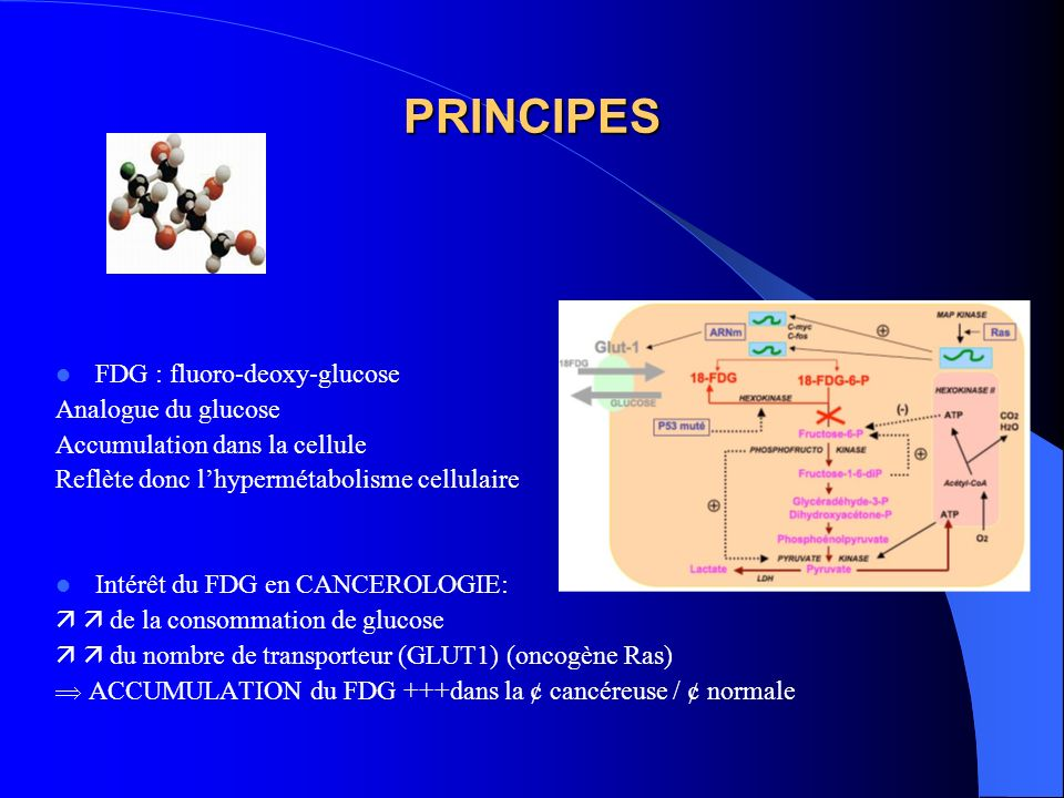 PRINCIPES FDG : fluoro-deoxy-glucose Analogue du glucose