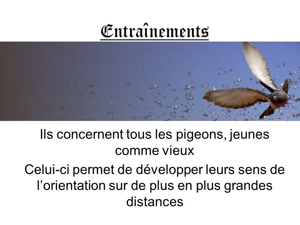Ils concernent tous les pigeons, jeunes comme vieux