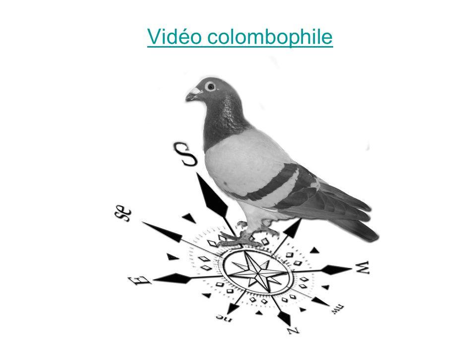 Vidéo colombophile