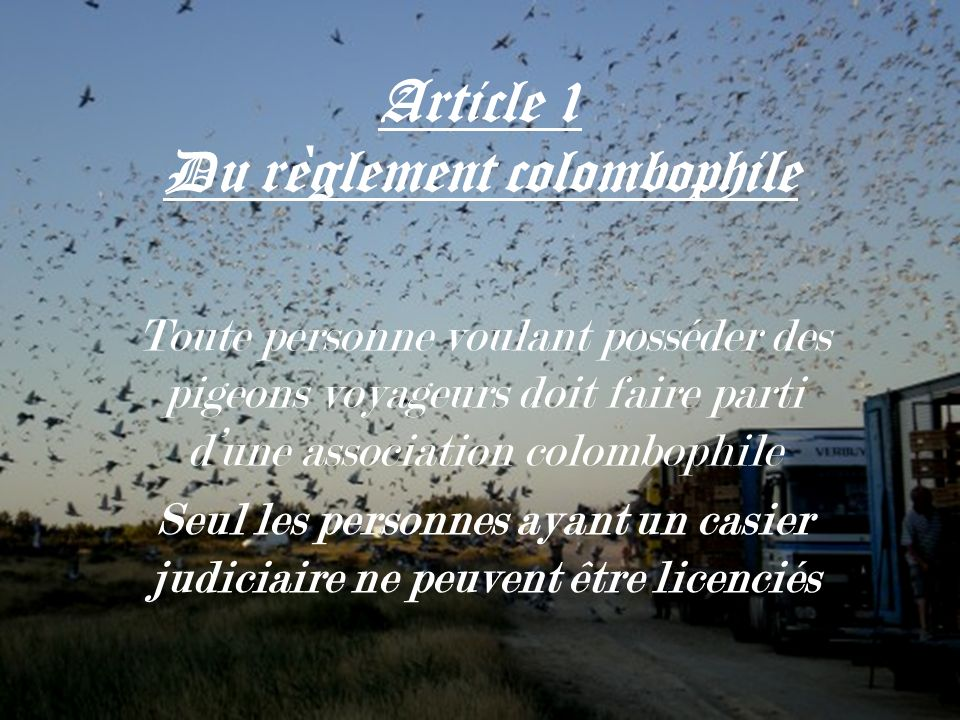 Article 1 Du règlement colombophile