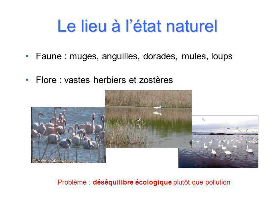 Le lieu à l'état naturel