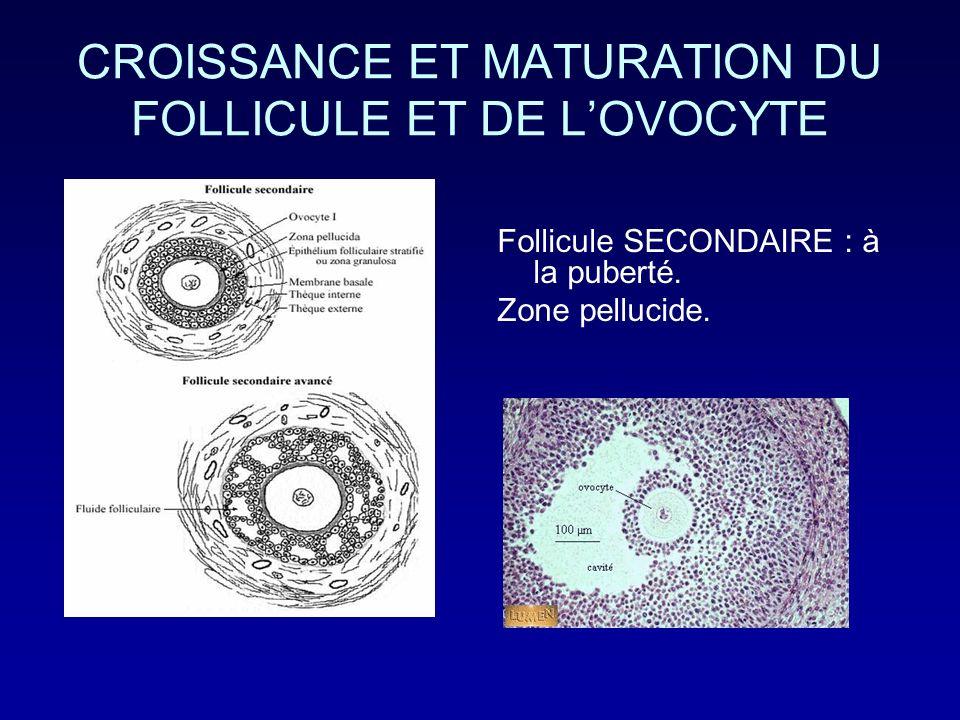 CROISSANCE ET MATURATION DU FOLLICULE ET DE L'OVOCYTE