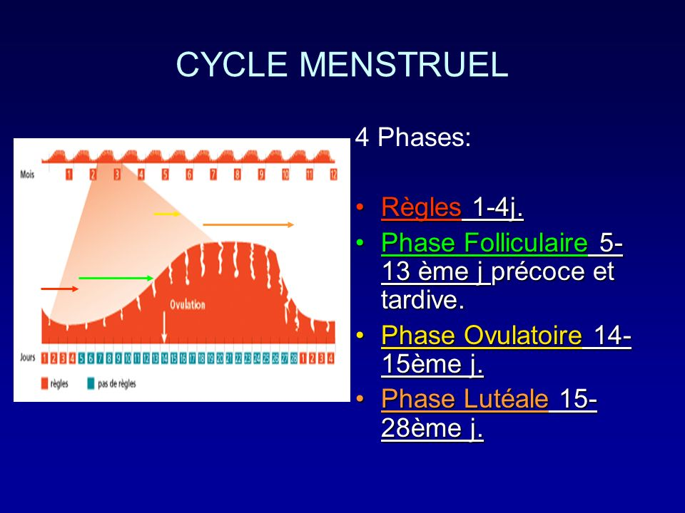 CYCLE MENSTRUEL 4 Phases: Règles 1-4j.