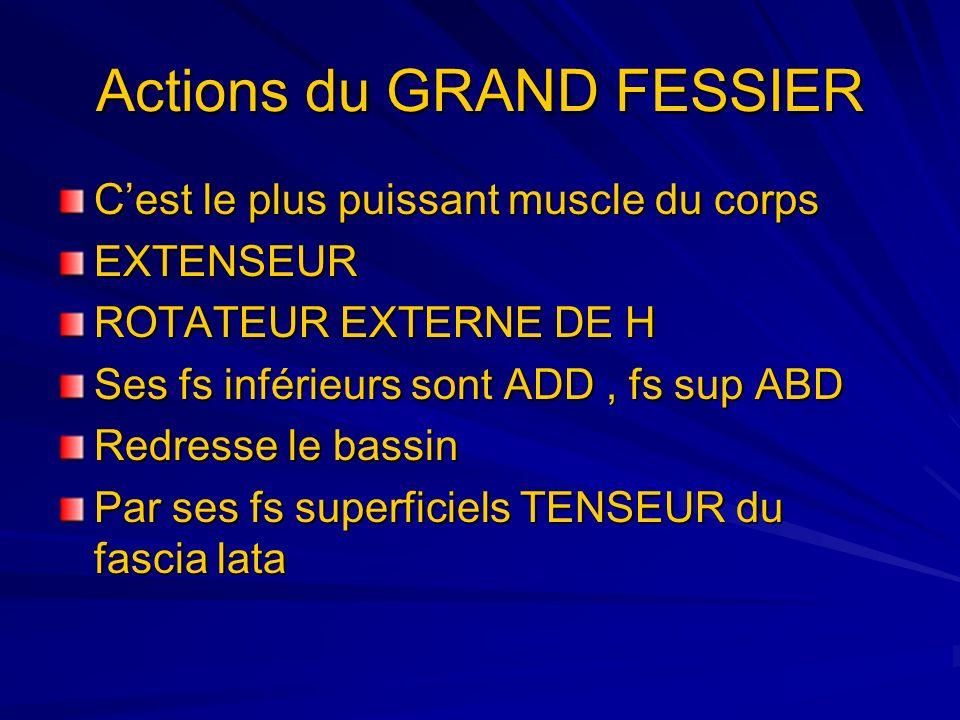 Actions du GRAND FESSIER
