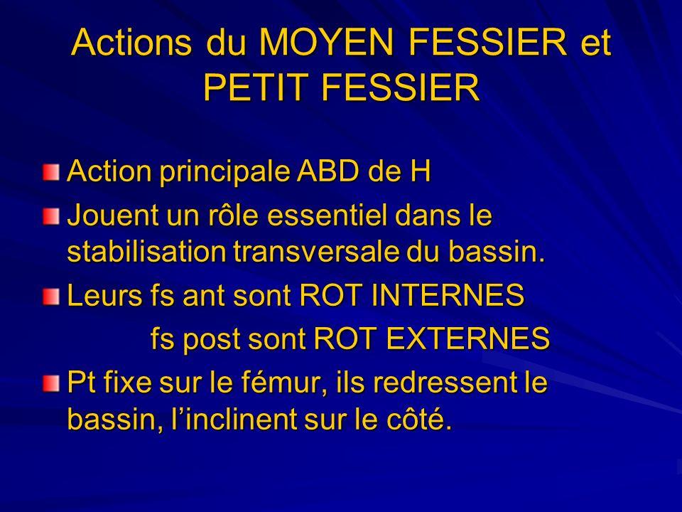 Actions du MOYEN FESSIER et PETIT FESSIER