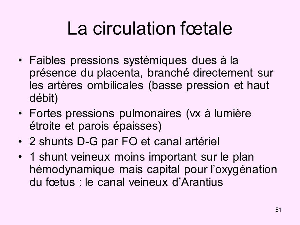 La circulation fœtale