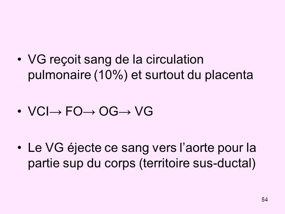 VG reçoit sang de la circulation pulmonaire (10%) et surtout du placenta