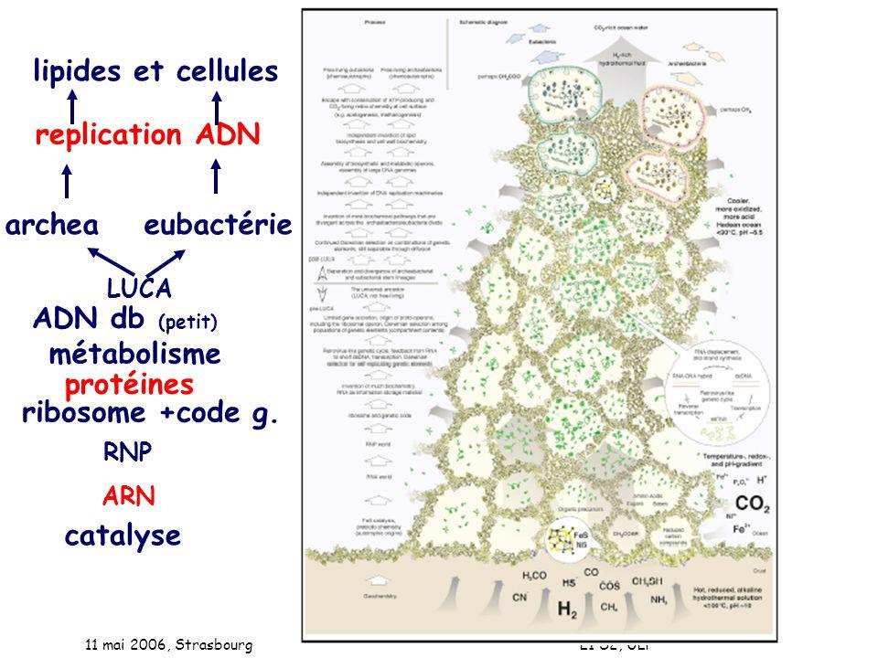 lipides et cellules replication ADN archea eubactérie ADN db (petit)