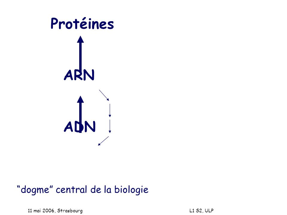 Protéines ARN ADN dogme central de la biologie