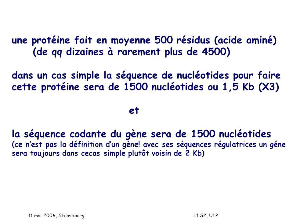 une protéine fait en moyenne 500 résidus (acide aminé)