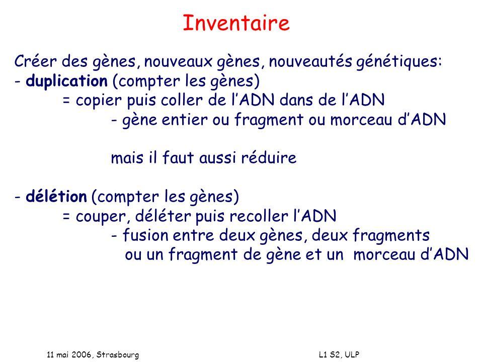 Inventaire Créer des gènes, nouveaux gènes, nouveautés génétiques: