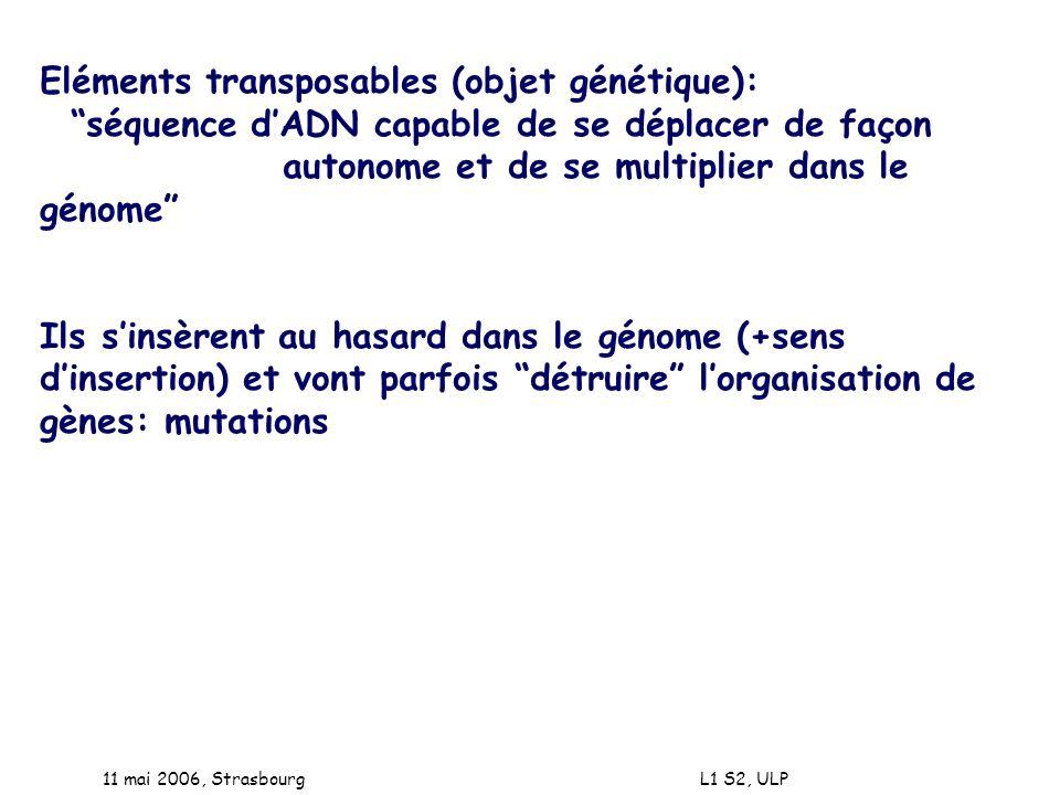 Eléments transposables (objet génétique):