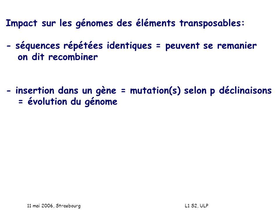Impact sur les génomes des éléments transposables: