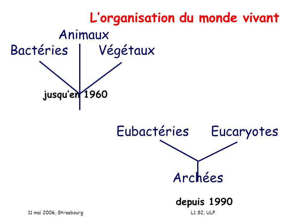 L'organisation du monde vivant Animaux Bactéries Végétaux