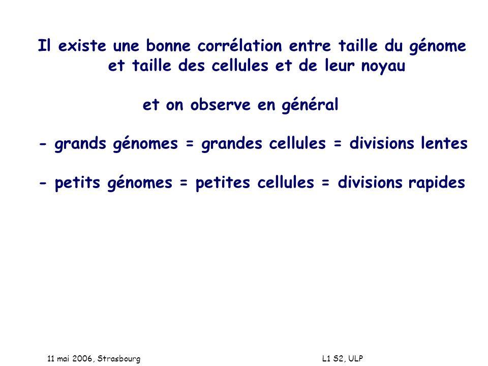 Il existe une bonne corrélation entre taille du génome