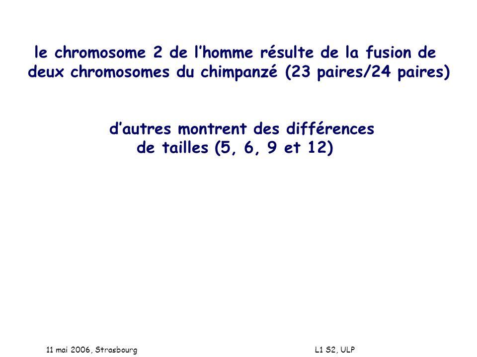 le chromosome 2 de l'homme résulte de la fusion de