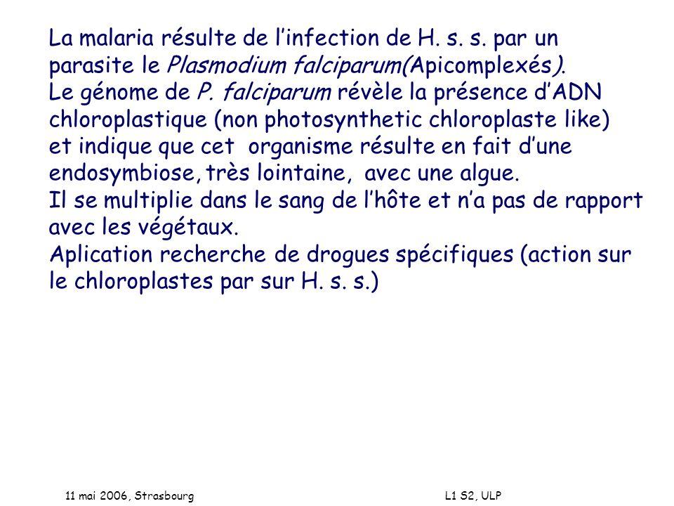 La malaria résulte de l'infection de H. s. s. par un