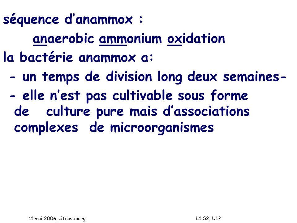 anaerobic ammonium oxidation la bactérie anammox a: