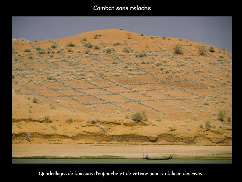 Combat sans relache Quadrillages de buissons d'euphorbe et de vétiver pour stabiliser des rives.