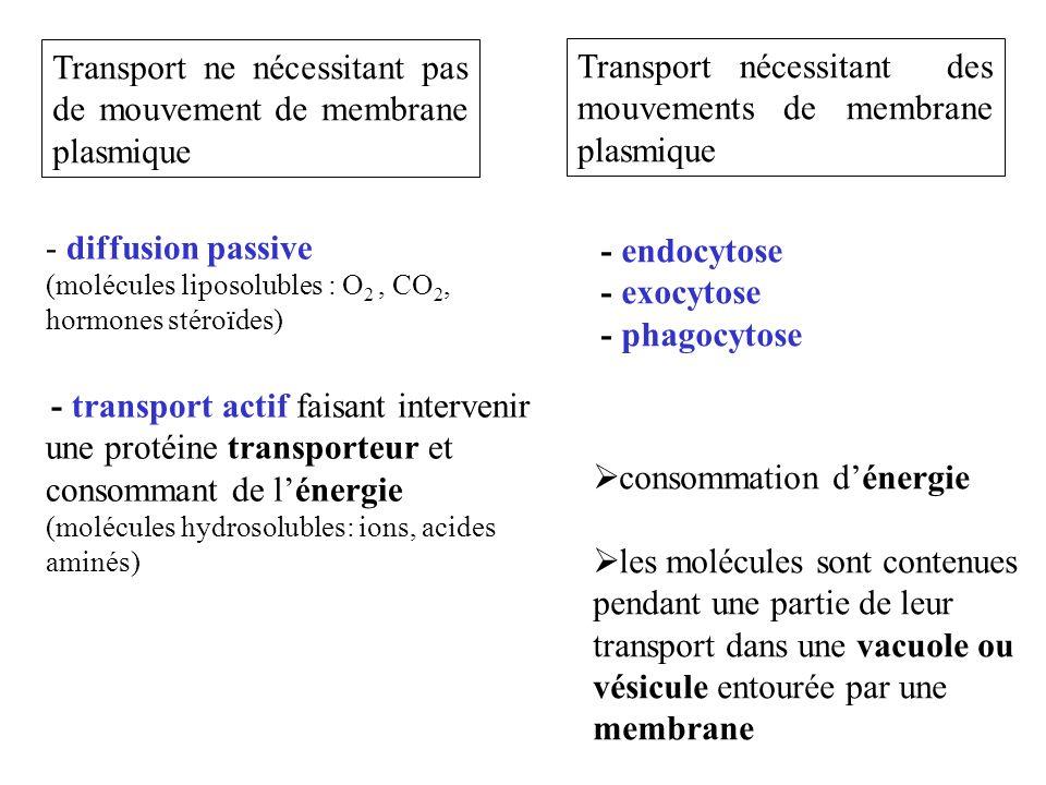 Transport ne nécessitant pas de mouvement de membrane plasmique
