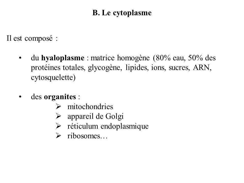 B. Le cytoplasme Il est composé :