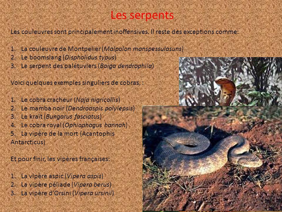 Les serpents Les couleuvres sont principalement inoffensives. Il reste des exceptions comme: La couleuvre de Montpelier (Malpolon monspessulasuns)