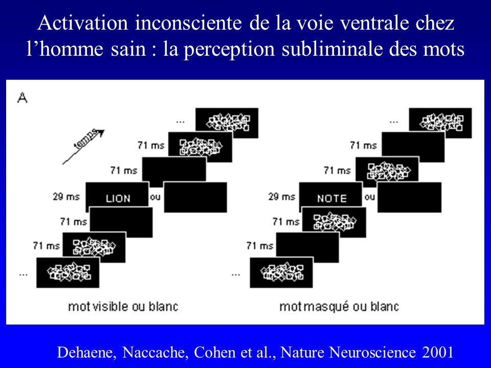 Activation inconsciente de la voie ventrale chez