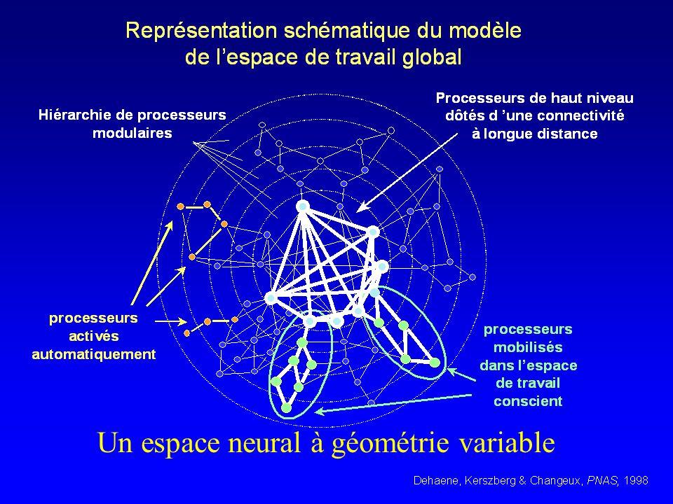 Un espace neural à géométrie variable