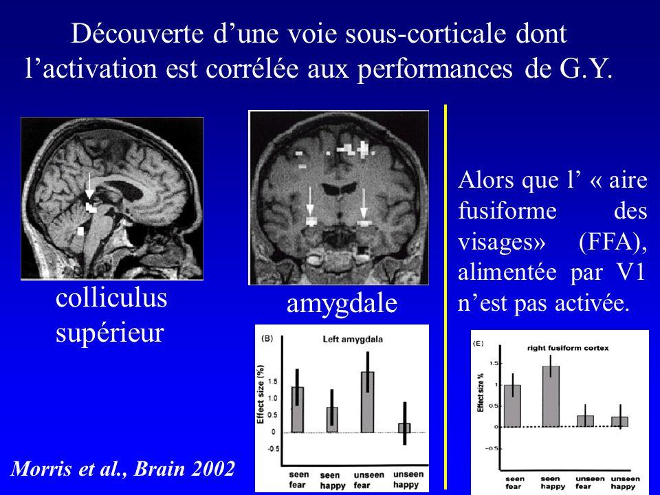 Découverte d'une voie sous-corticale dont