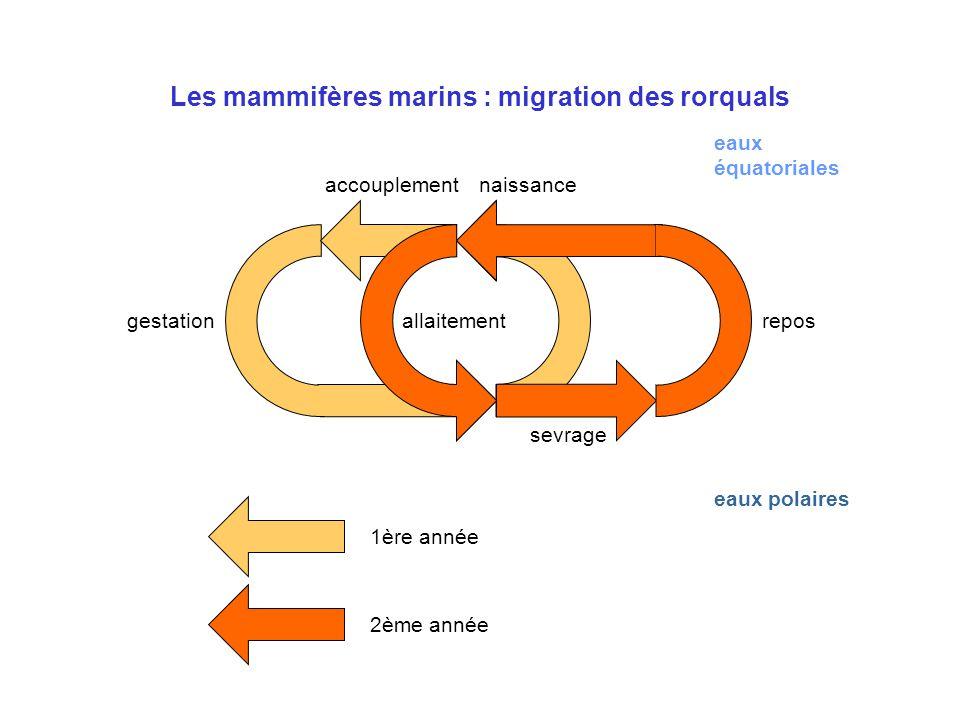 Les mammifères marins : migration des rorquals