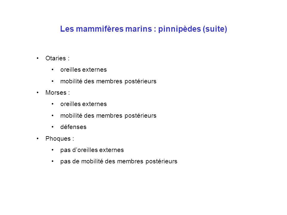 Les mammifères marins : pinnipèdes (suite)