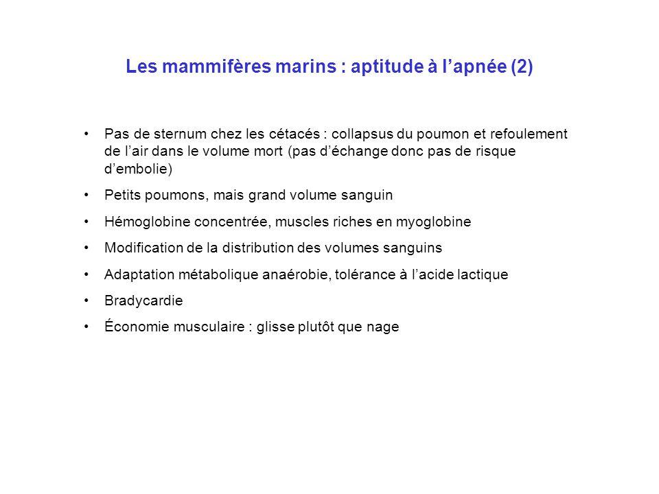 Les mammifères marins : aptitude à l'apnée (2)