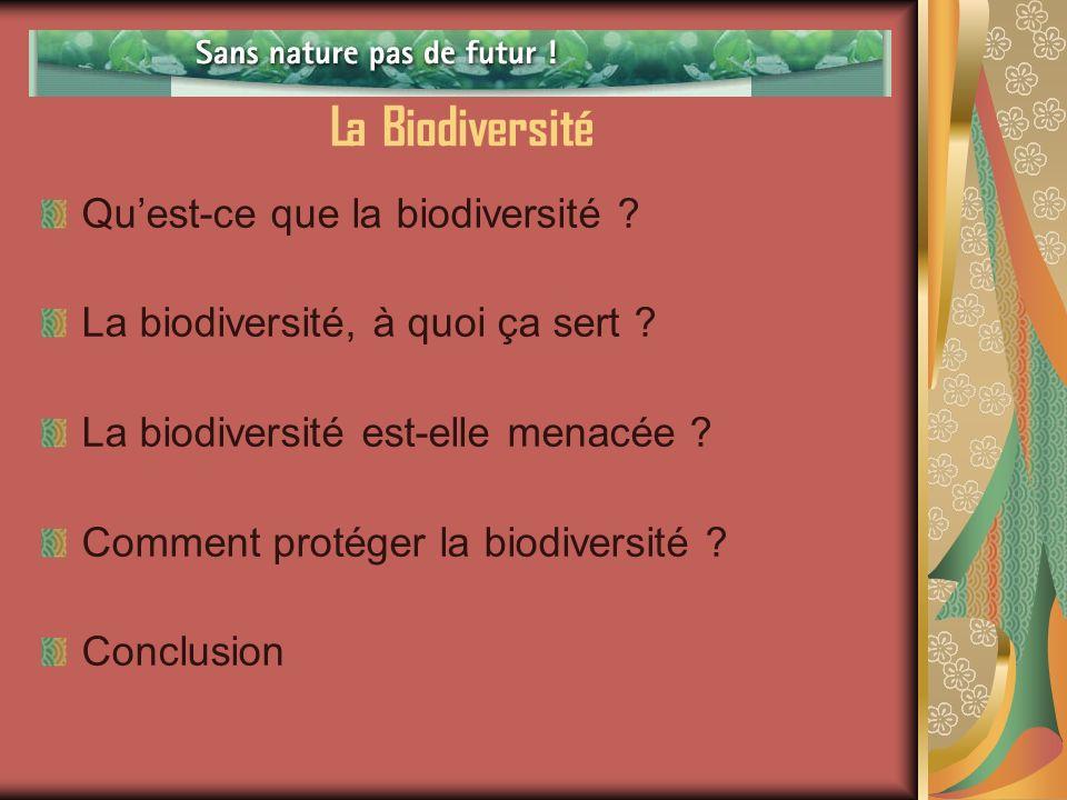 La Biodiversité Qu'est-ce que la biodiversité