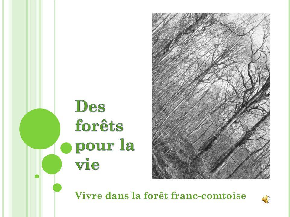 Vivre dans la forêt franc-comtoise