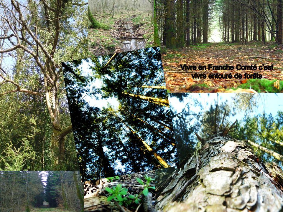 Vivre en Franche Comté c'est vivre entouré de forêts